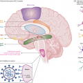 Neuropathogenesis and Neurologic Manifestations of the Coronaviruses in the Age of Coronavirus Disease 2019
